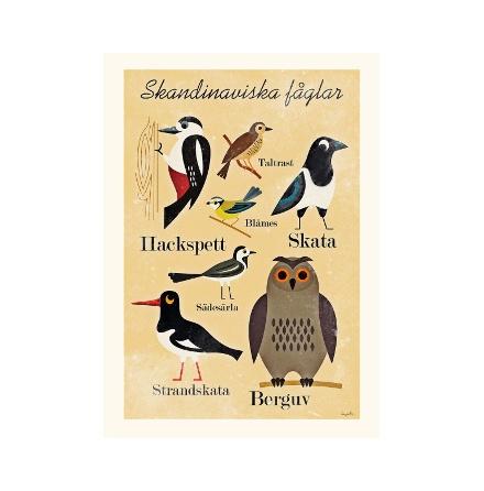 Affisch/tryck, Skandinaviska fåglar